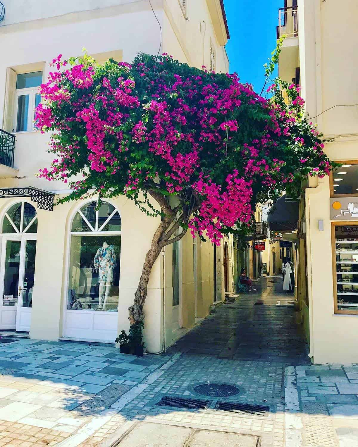 bougainvillea in greece