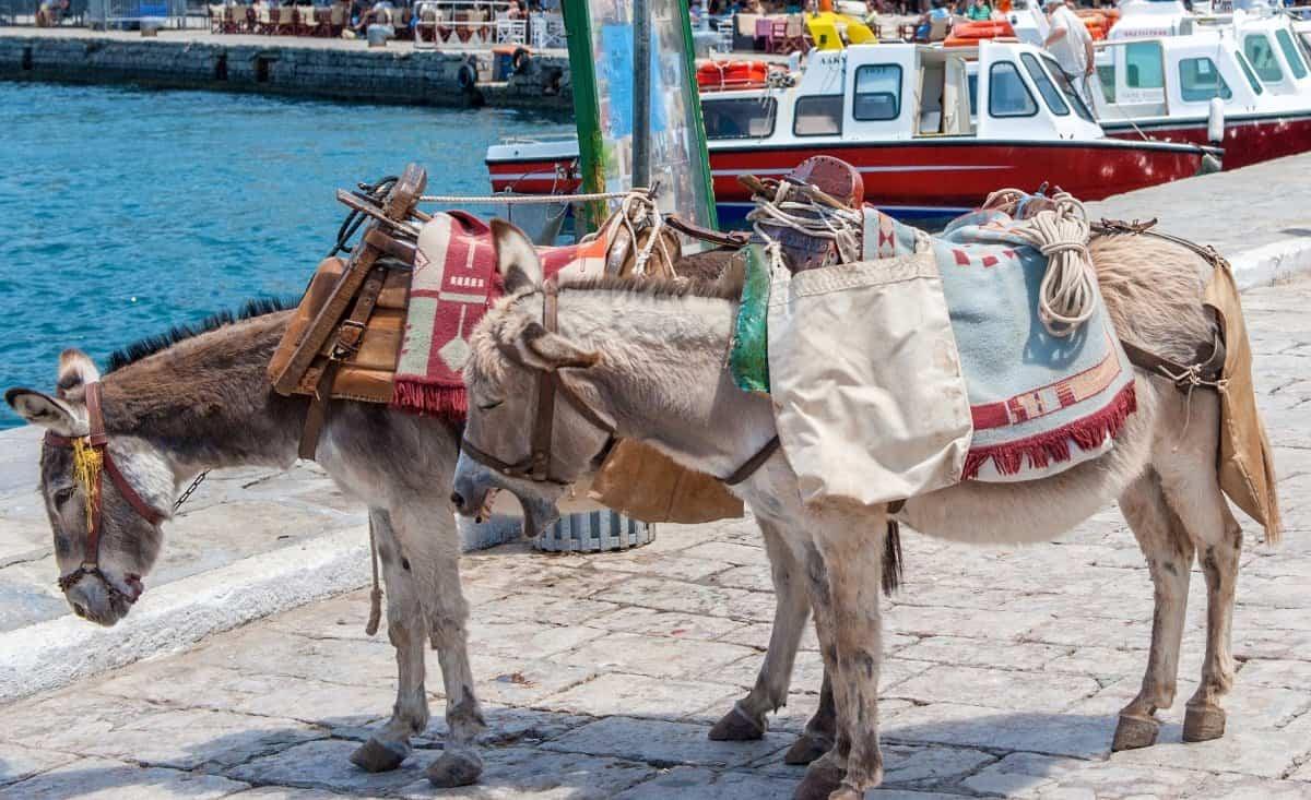 donkeys in greece